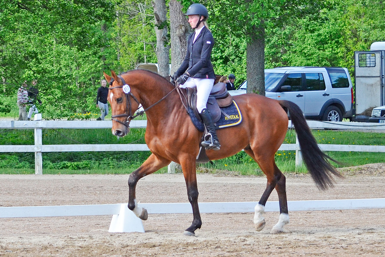 Viking Hästak SWB hingst 168 cm e Heartbeat u Rosali Hästak e Carmargue, uppf/äg Hästak AB. (8 8) = 81,3% diplom C