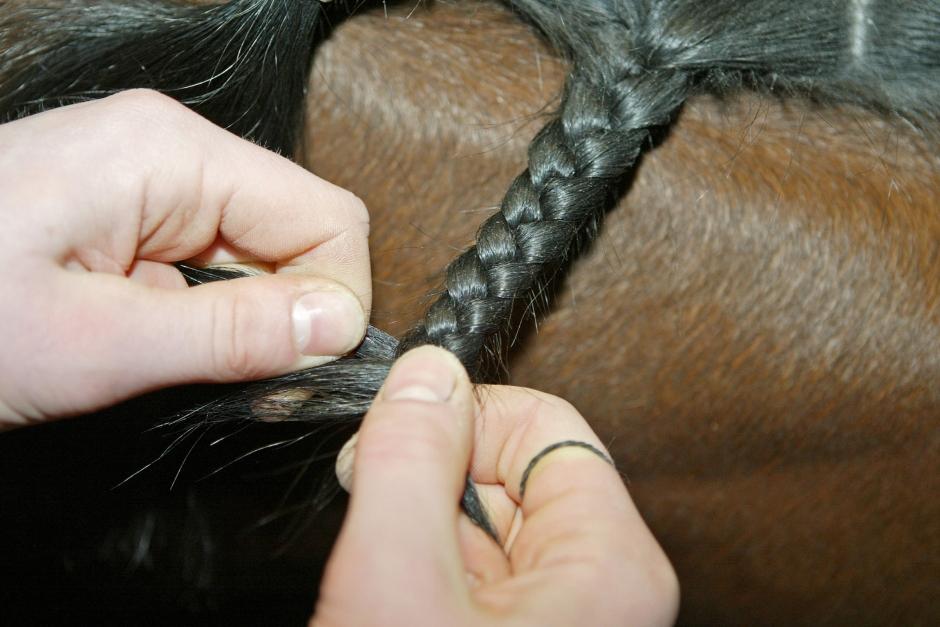 Förbundet tillbakavisar kritik mot yrkesprov för hästskötare
