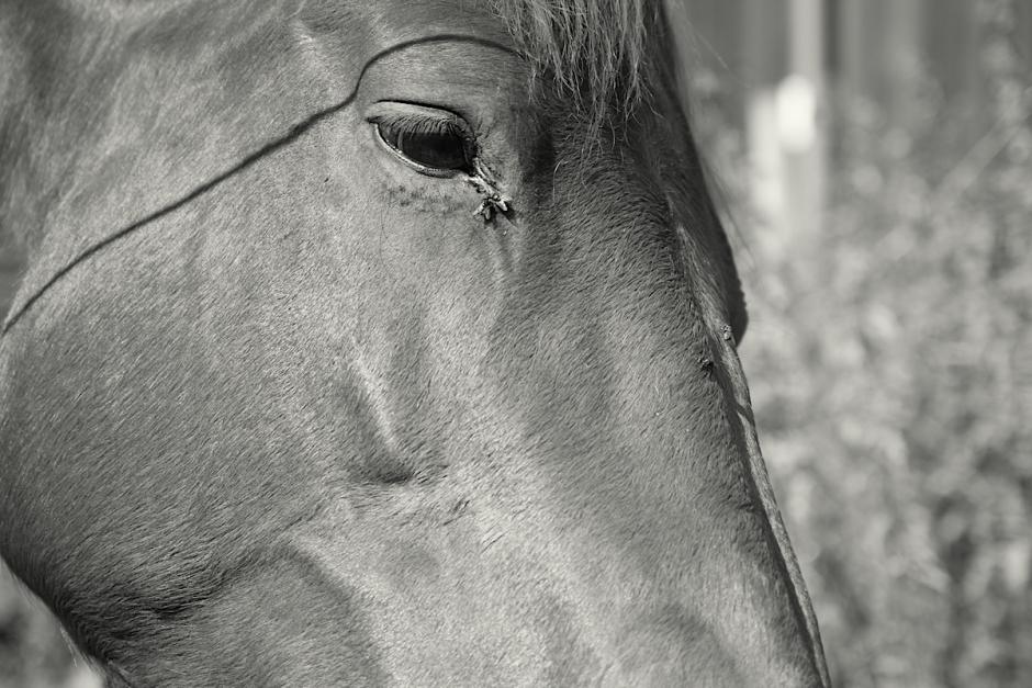 Nytt fågelvirus kan smitta hästar