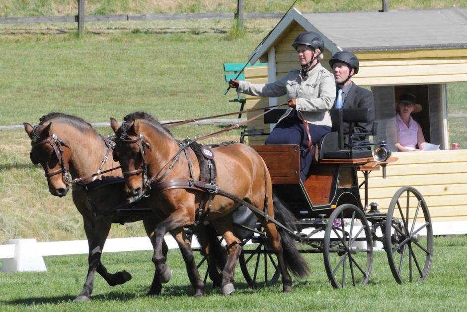 Holländska hästar i topp under körig dressyrdag