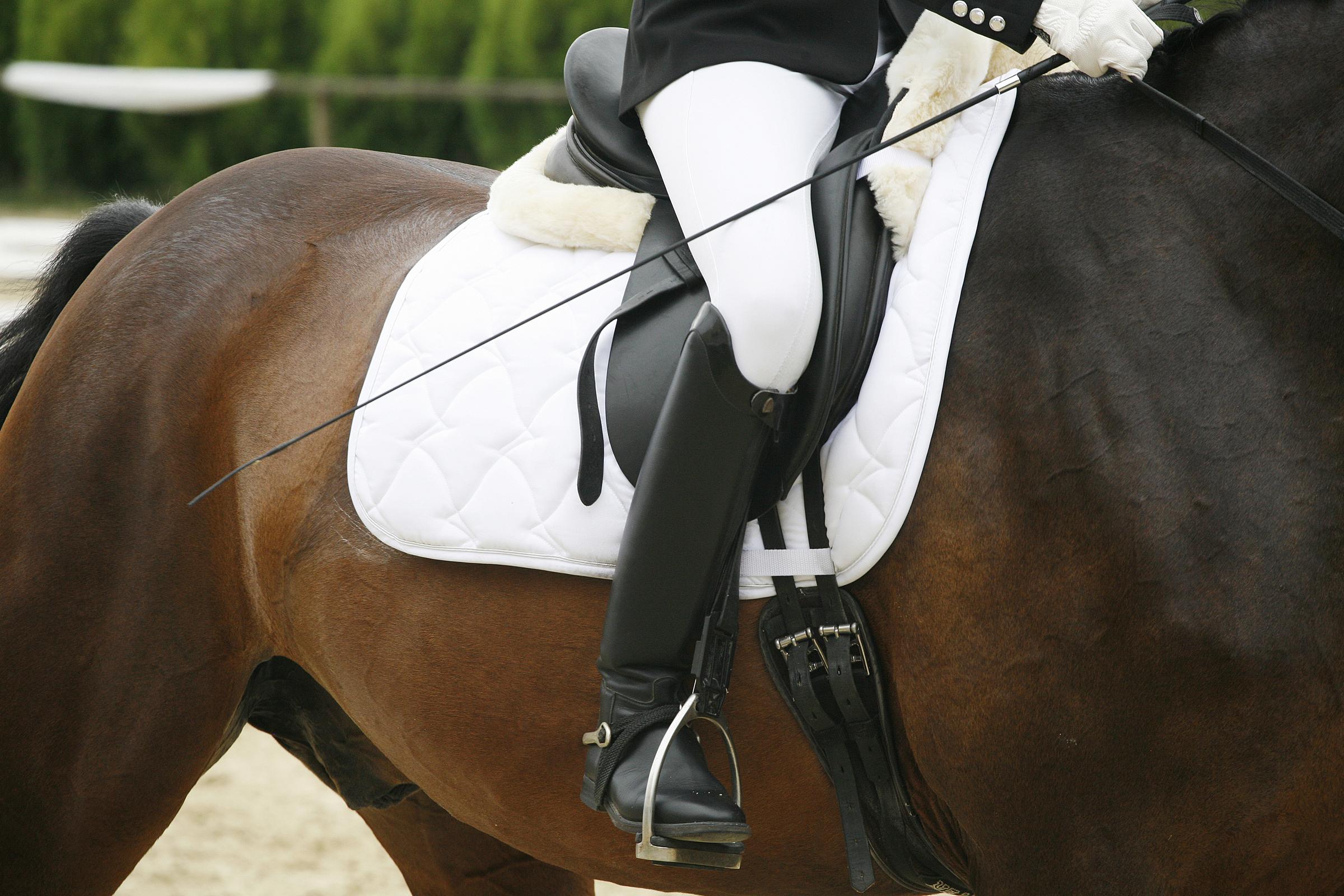 Unknown Rider Sitting On A Dressage Horse