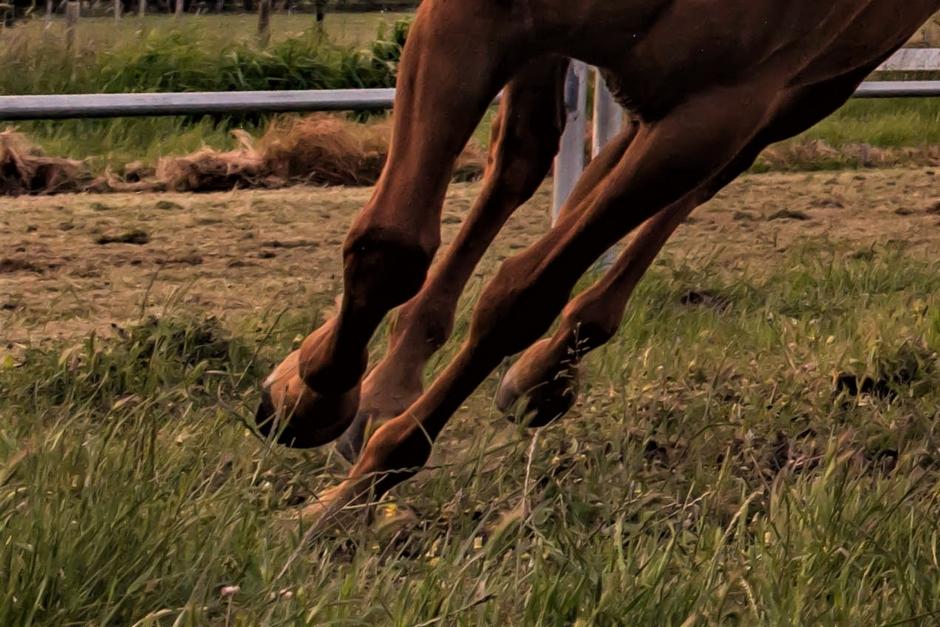 Hästar jagade av okänd man i hage