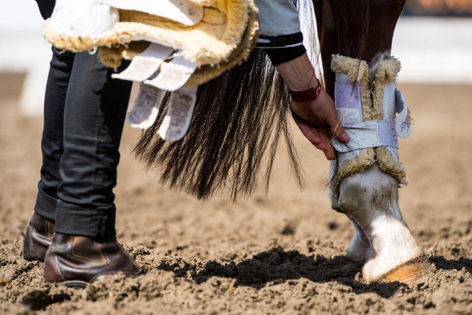 Arbetsmiljöverket ställer krav på hästbranschen efter inspektioner