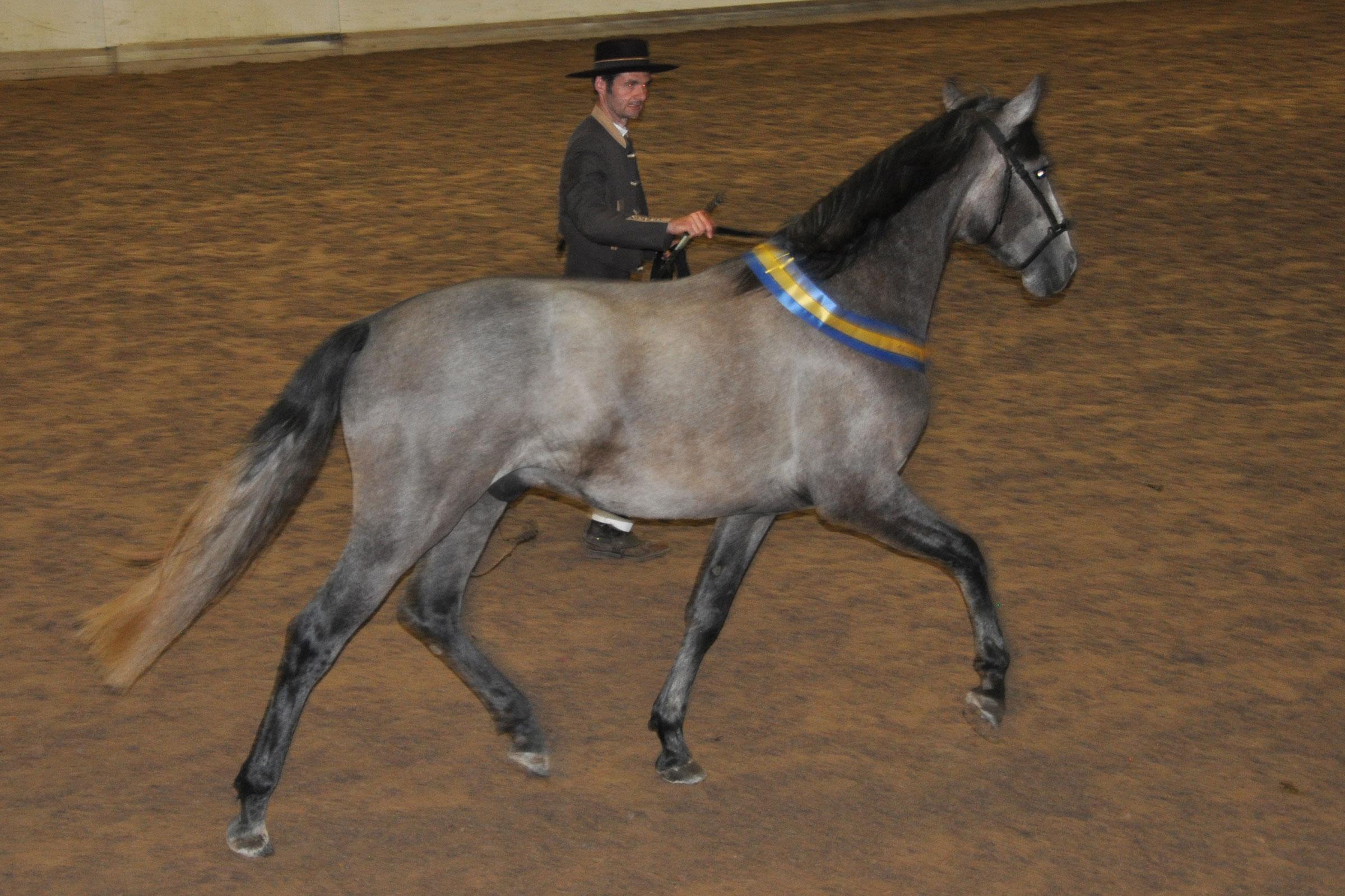 F Torres e Oscuro IV u Estepeña XXV, uppg/äg Rosmarin. 59,940 poäng, Champion unghingst