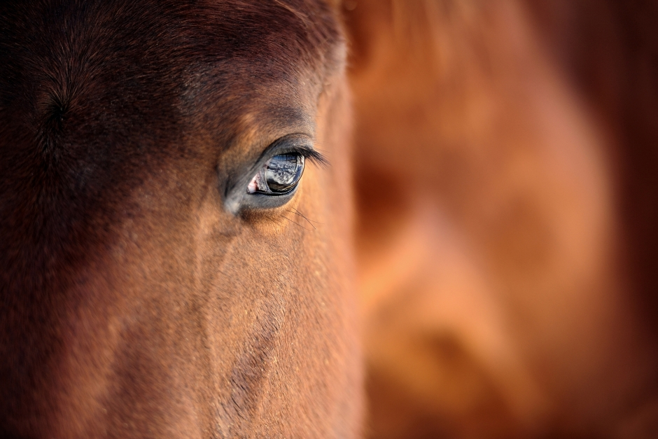 Ytterligare en häst död till följd av abortvirus