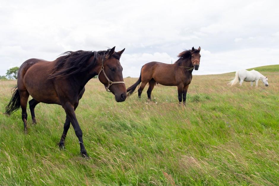 Har du koll på Sveriges vanligaste hästar?