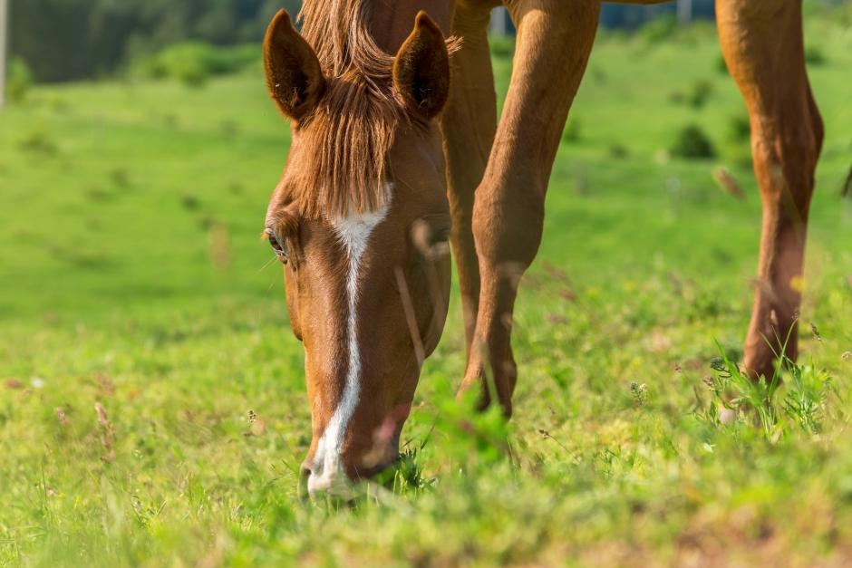 Stopp för djurfrågor hos Giftinformationscentralen