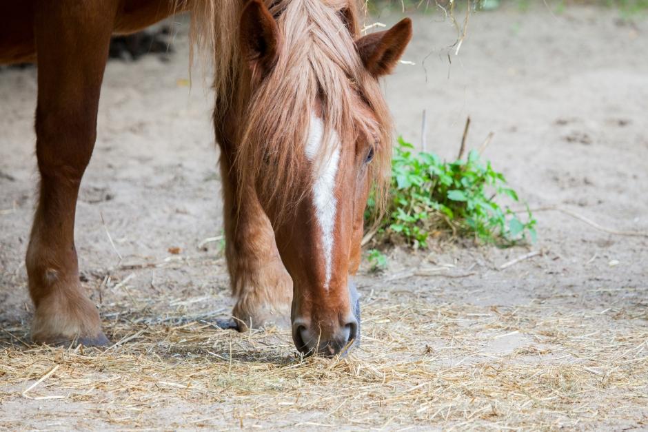 Ridskolehästar matas i smyg