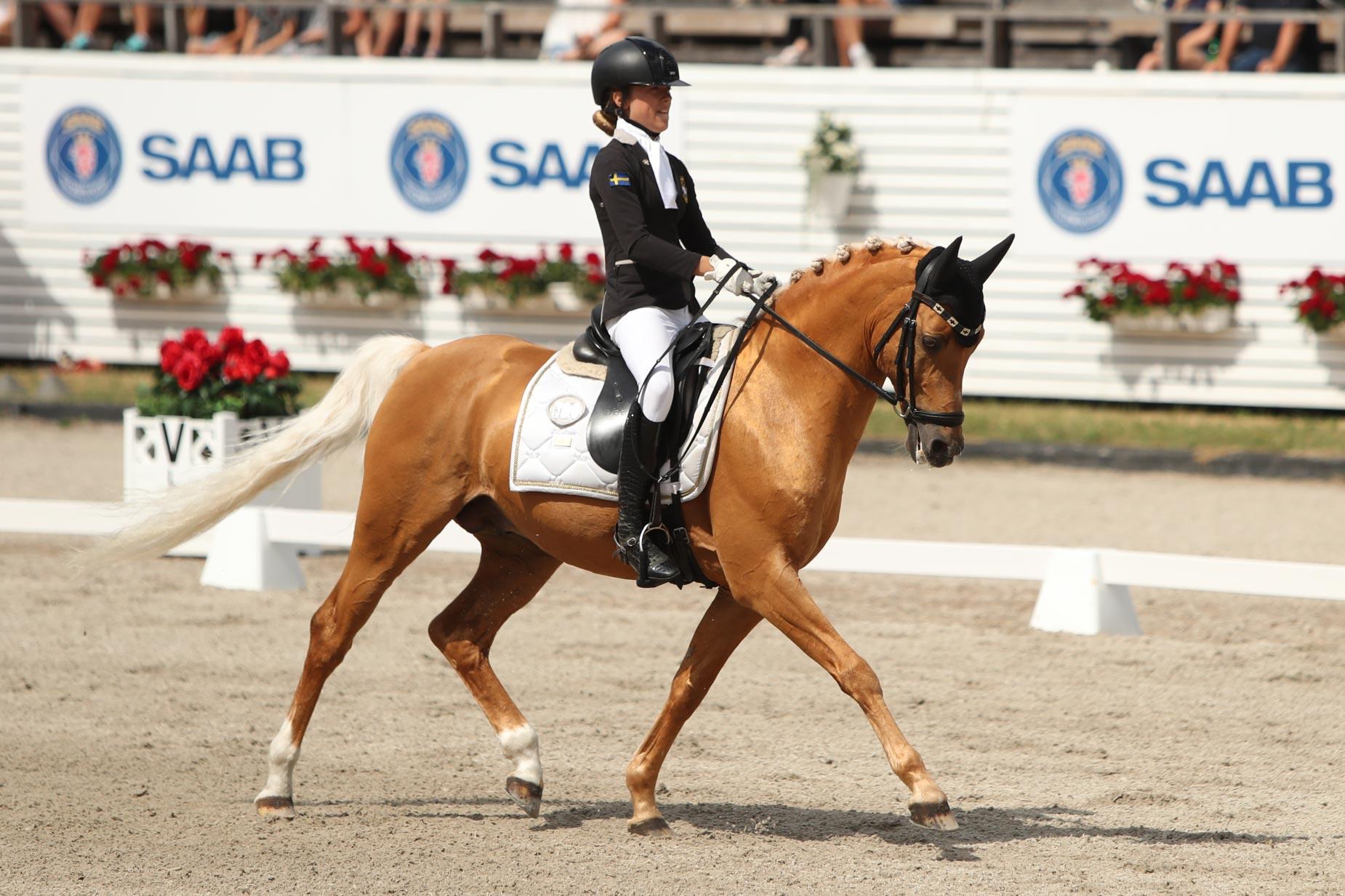 Emilia Berglund Bergåkra - Jarno RP 145 (ASRP hingst f-01 e Coelenhage's Purioso-Coelenhage's Let's be the Best, uppf R. Bonhof) 71,417%