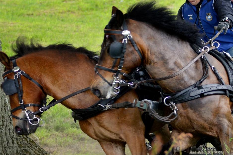 Körningen gör comeback i Vinslöv