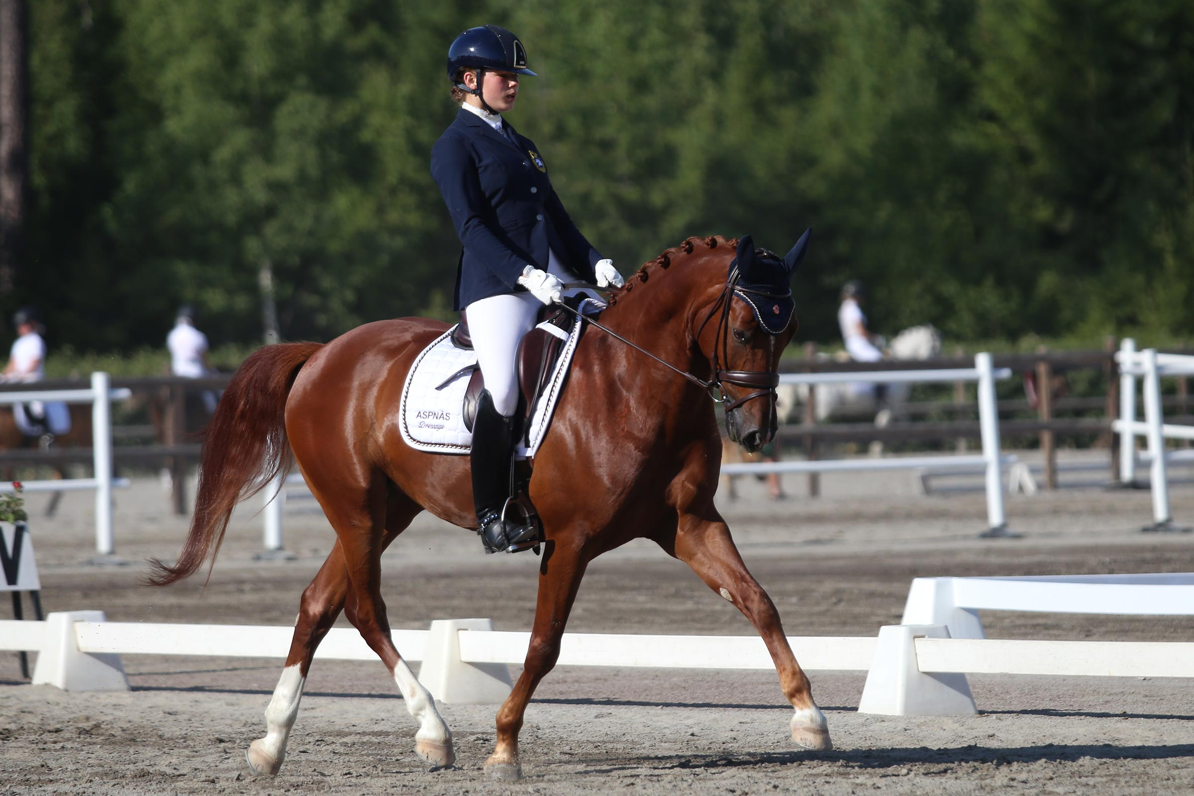 Guld: Moa Sundelöf - Camino Royal (WESTF val f-13 e FS Cracker Jack-Courage, uppf Bernhard Jensen) 167,600