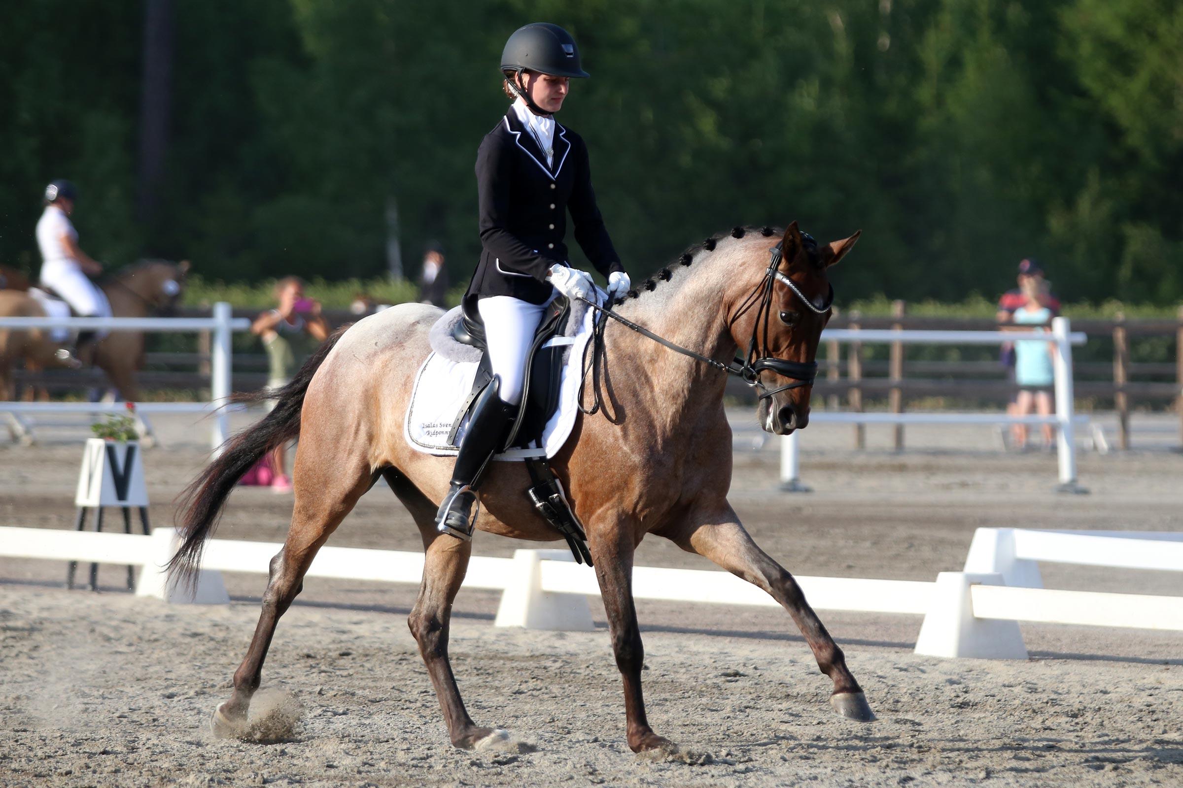 Guld: Hanna Edlund - Cheesecake (ASRP sto f-12 e Elphins Roquefort-King's Bonus xx, uppf Maria Fernström) 160,400