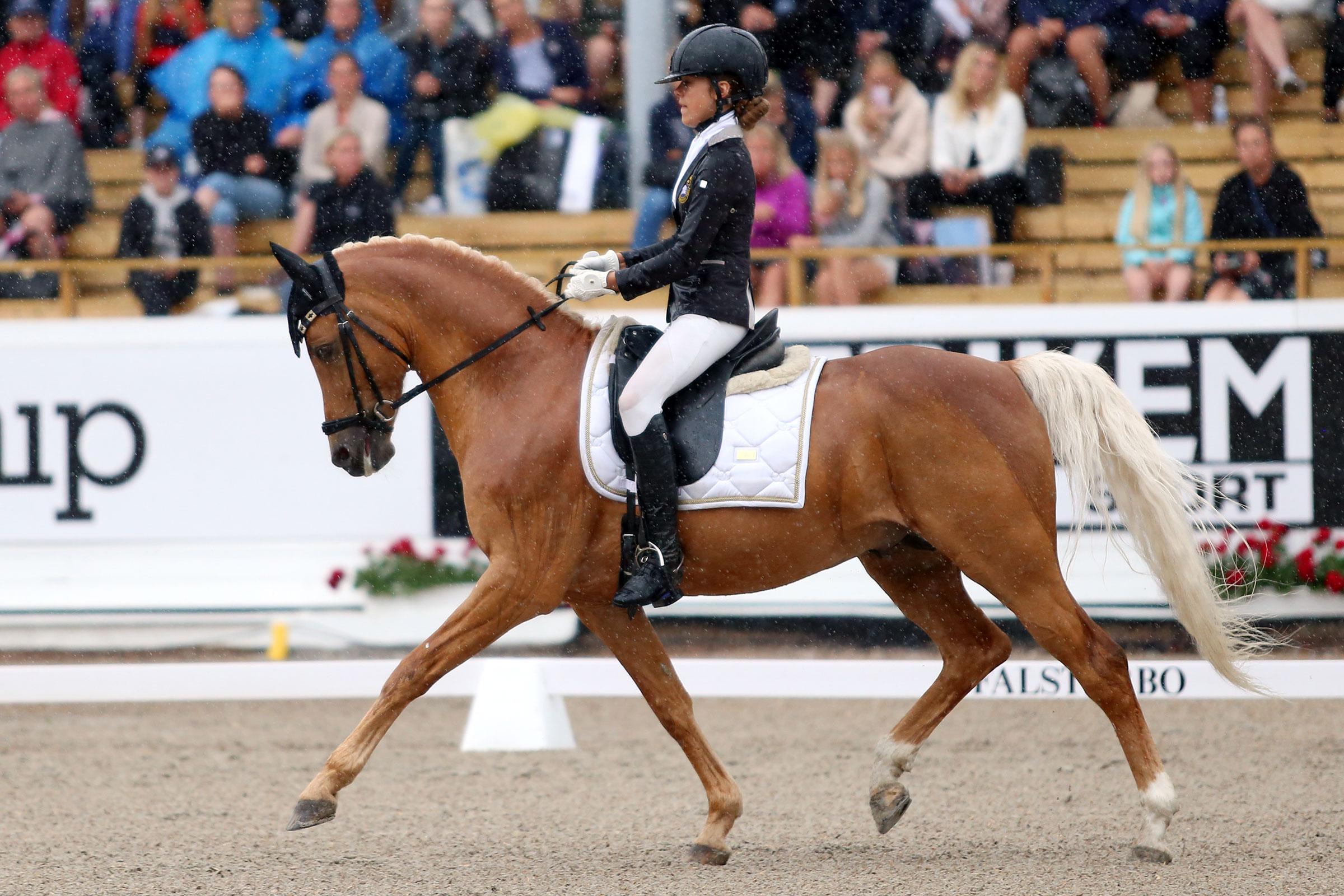 Emilia Berglund Bergåkra - Jarno RP 145 (ASRP hingst f-01 e Coelenhage's Purioso-Coelenhage's Let's be the Best, uppf R. Bonhof) 71,098%