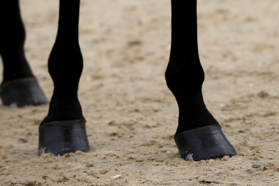 Fyra hästköpare förlorare efter konkurs
