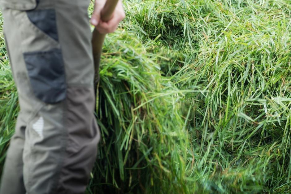 Hötjuvar skördade och stal från fält