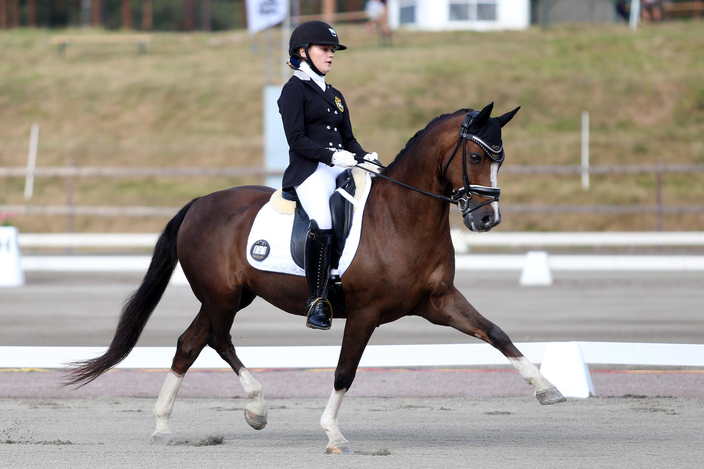 Silver: Elsa Ottosson - Don Chocolo (DRP val f-01 e Don Gregory-Rakt's Rocky)
