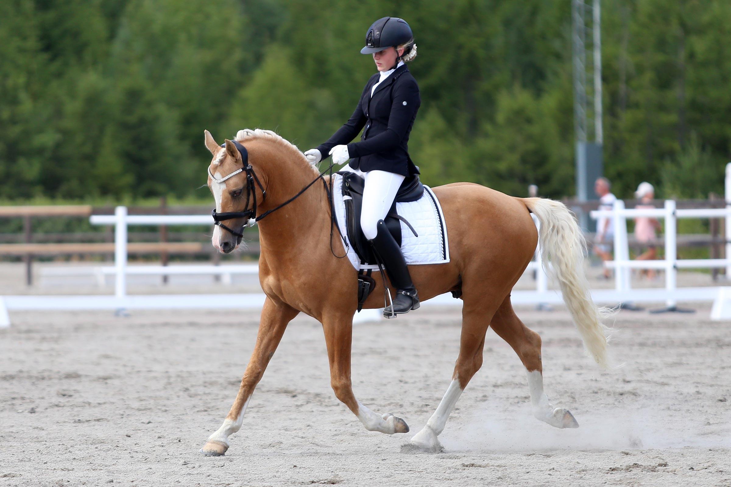 Guld: Kelly Nilsson - Cartier RP 164 (ASRP hingst f-05 e Deinhard B-Brillant, uppf Tord & Ruth Börjesson)