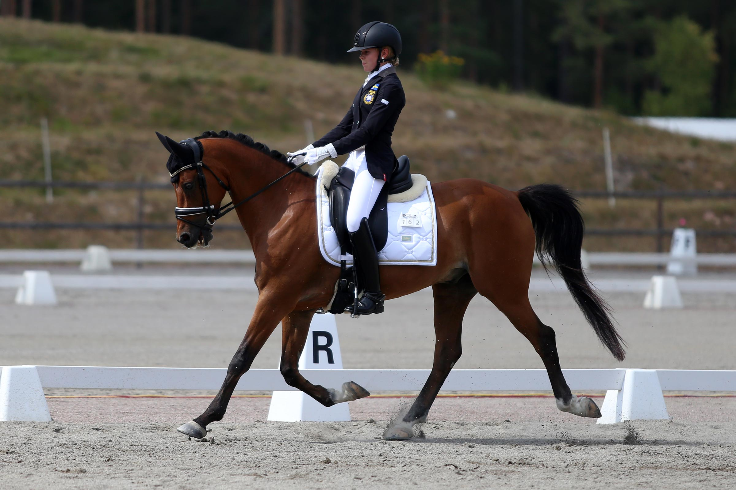 Silver: Meja Karlsson - Wise Guy (NL val f-08 e Bodo-Orchard d'Avranches, uppf S.H. Rutgers)