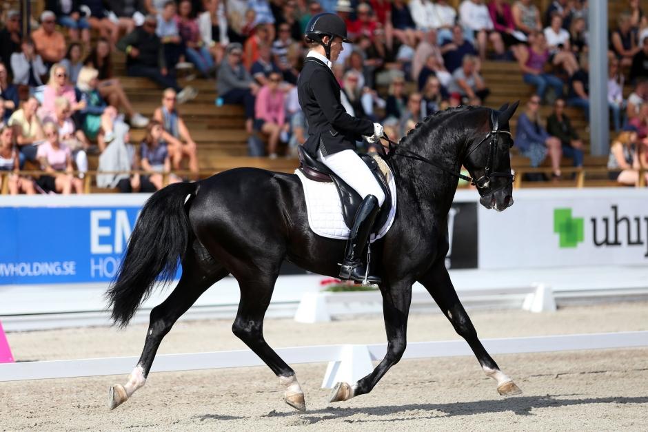 Total Hope vann prestigetävling för unga hästar – se honom här