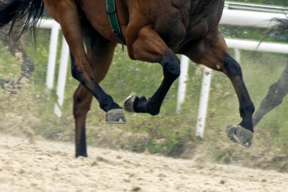 Två döms för djurplågeri efter att ha piskat häst