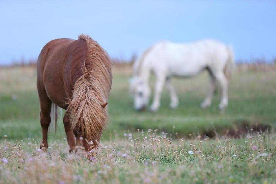 Inget stöd ur krispaketet till hästnäringen
