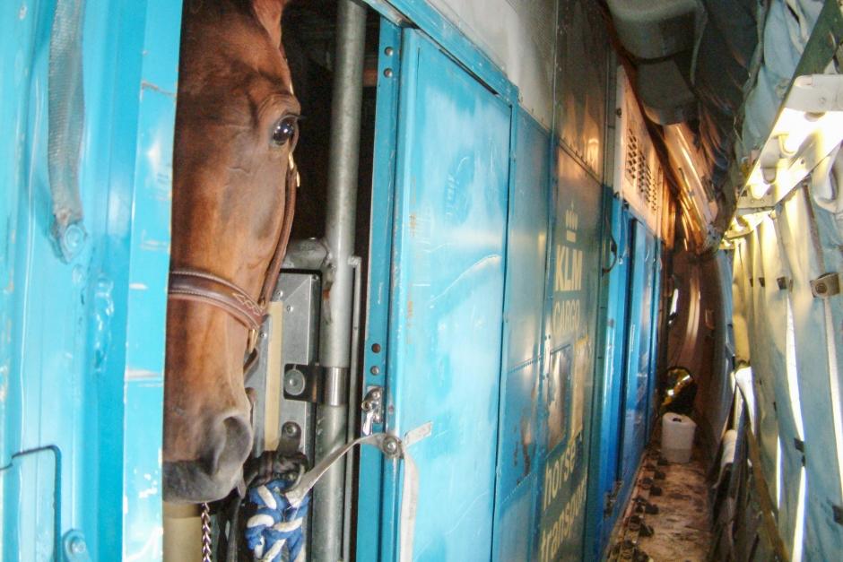 Första hästarna på väg mot VM