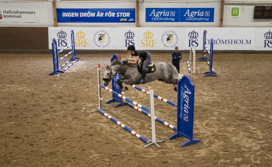 Proffsens tips om hållbar matchning av unghästar