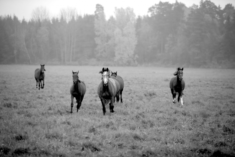 Hästar släppes ut från sina hagar av obehöriga