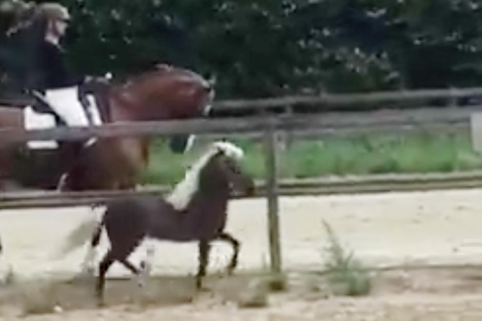 Snart två miljoner visningar: Miniatyrhästen visar upp sina moves