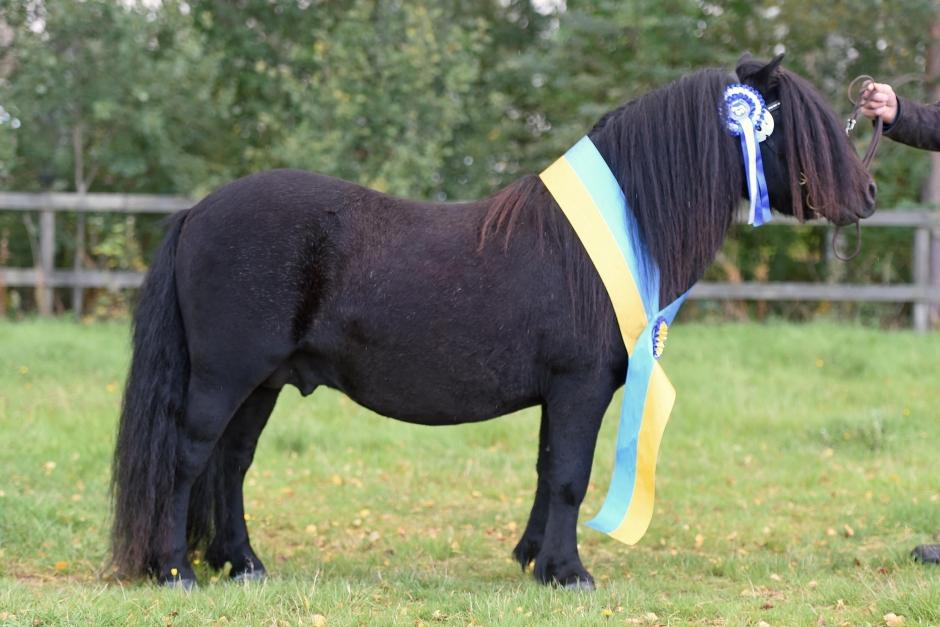 "Nightingales Hashtag blev ""Årets Ponny"""