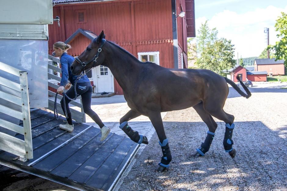 En lastbil kommer lastad med… VM-hästar