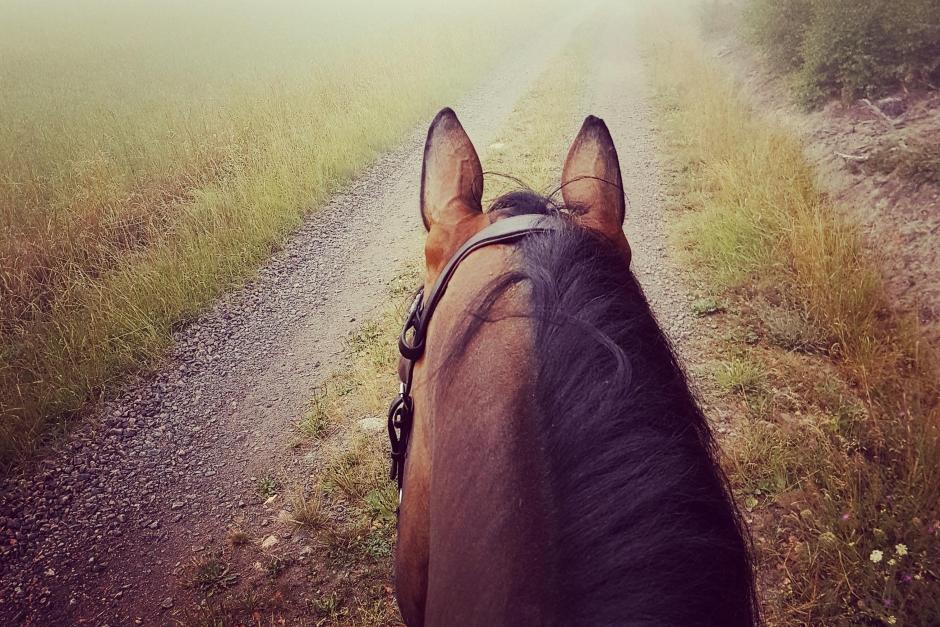"""""""Så ser min veckoplanering ut för mig och hästarna"""""""