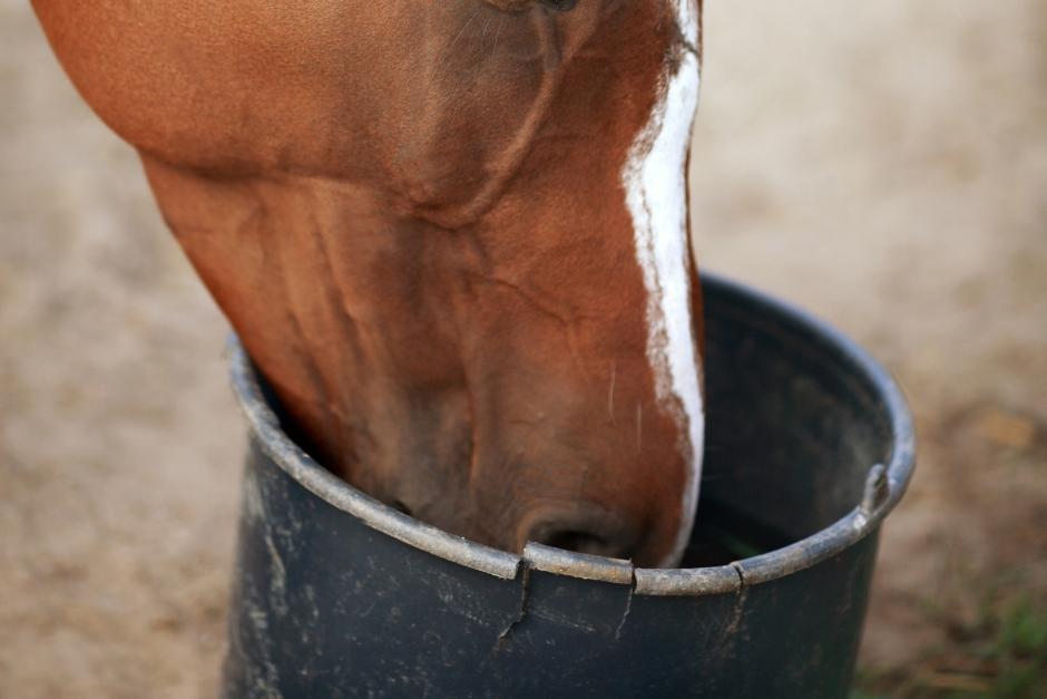Häst fick fel foderhink med medicin i – ryttare stängs av