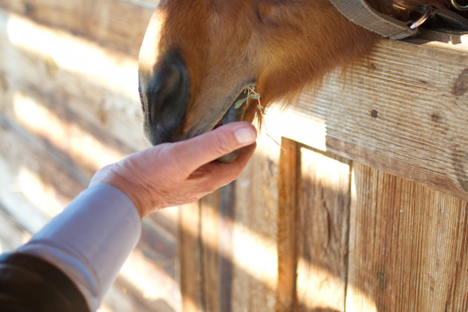 I torkans spår: Så påverkas foderläget och hästmarknaden
