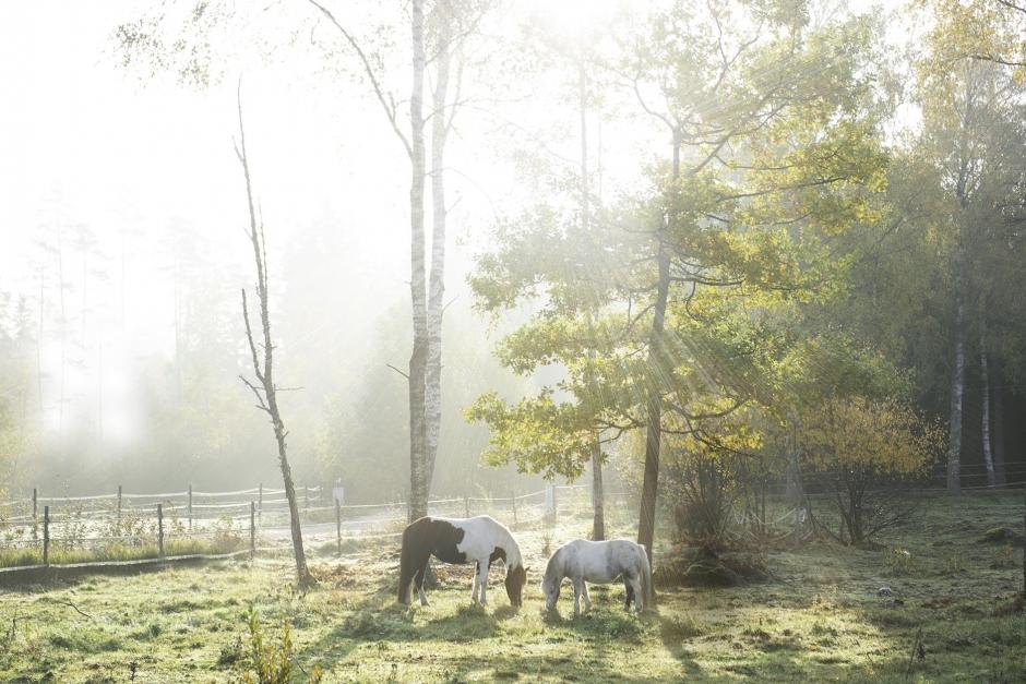 Konstant i numerärt underläge – boxplay som ponnypappa