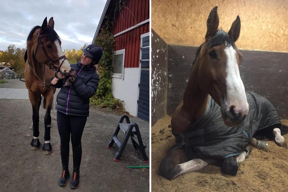 """Cornelias blogg: """"När kylan kom blev alla hästar knäppa"""""""