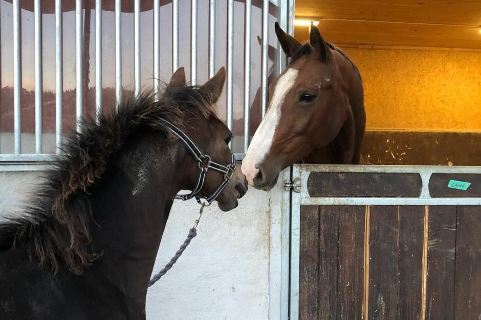 """Cornelias blogg: """"Så ser en vanlig foderdag ut för mina hästar"""""""