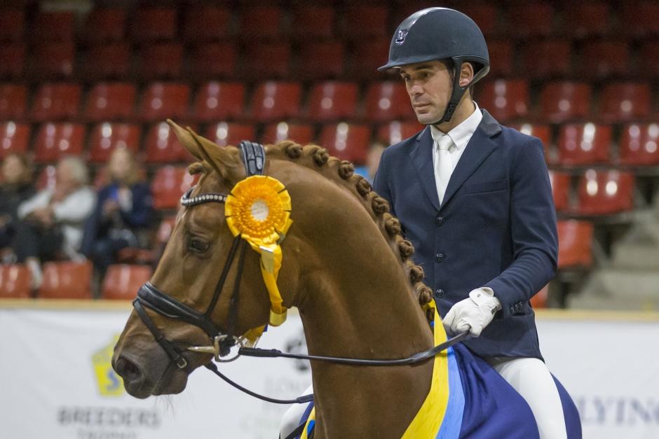 Dressyrryttarna klara till Stockholm Horse Week