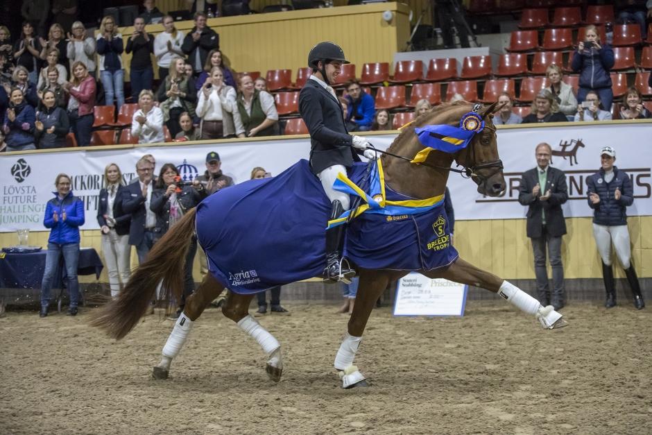 Dags för årets Breeders Trophy – dressyrhästarna först ut