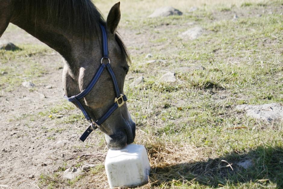 Så får hästen rätt salt i rätt mängd