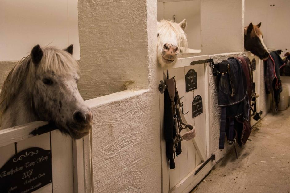 """Ponnypappans test: """"Ett antal tecken på att du är en ponnypappa"""""""
