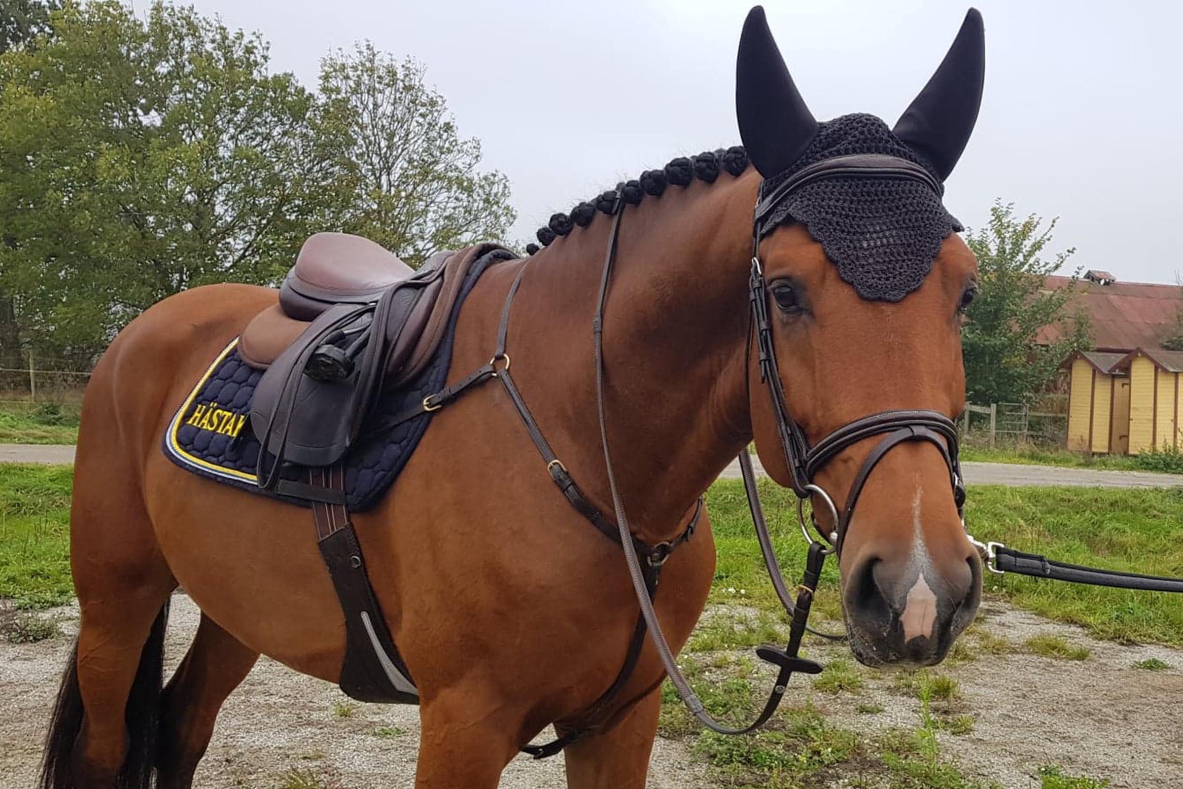 Viking.hästak