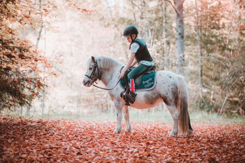 Ny lista med vanligaste hästnamnen