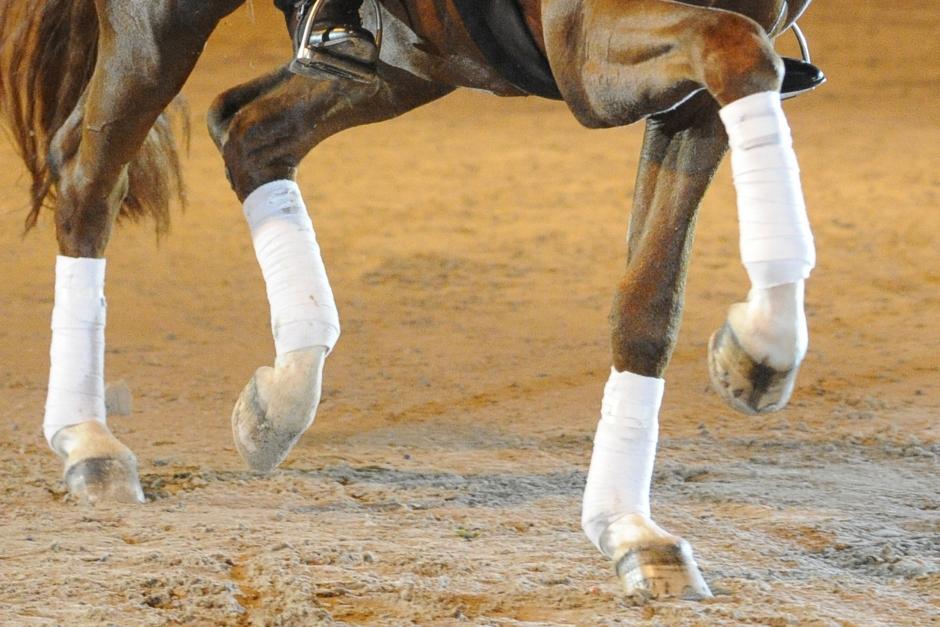 Framtidens dressyrhäst: Det här tror avelsprofilerna på