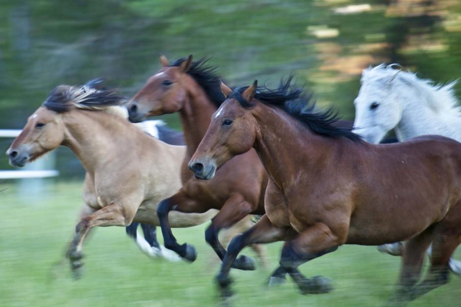 Hundägare misstänks för brott efter hästjakt