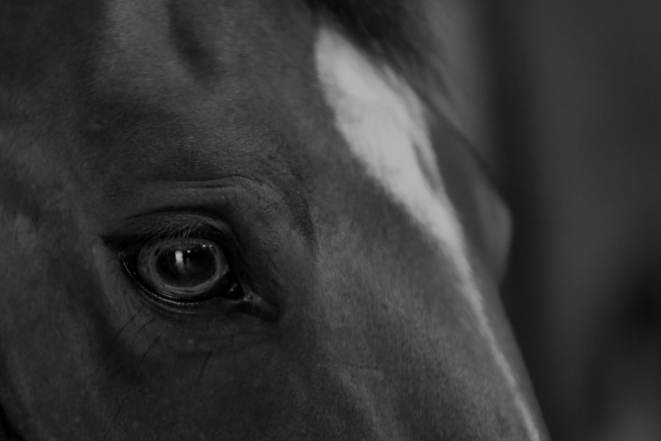 Ännu en svenskägd häst död i Valencia