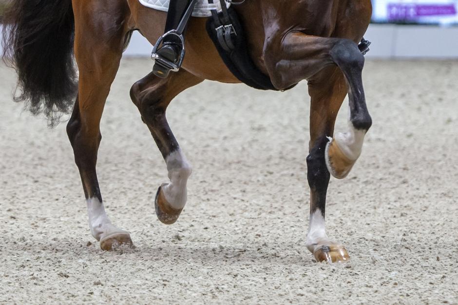 Framtidens dressyrhäst: Det här vill sportprofilerna se