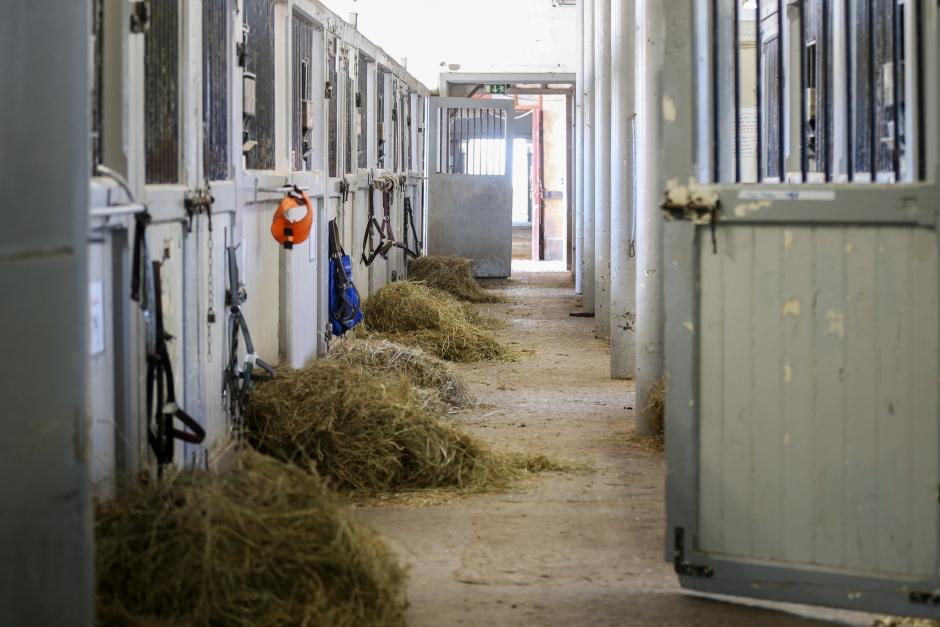Luftrenare i stallet håller hästarna friska