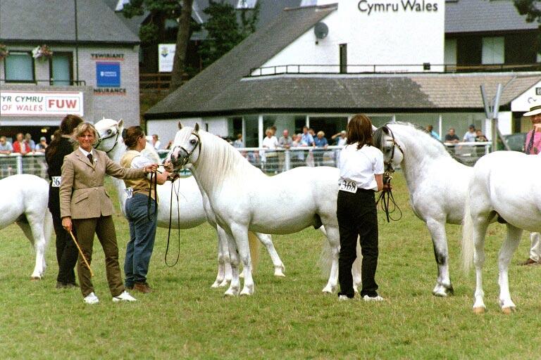 Detta första är Anna som visar Burhults Toy på The Royal Welsh Show 2002.