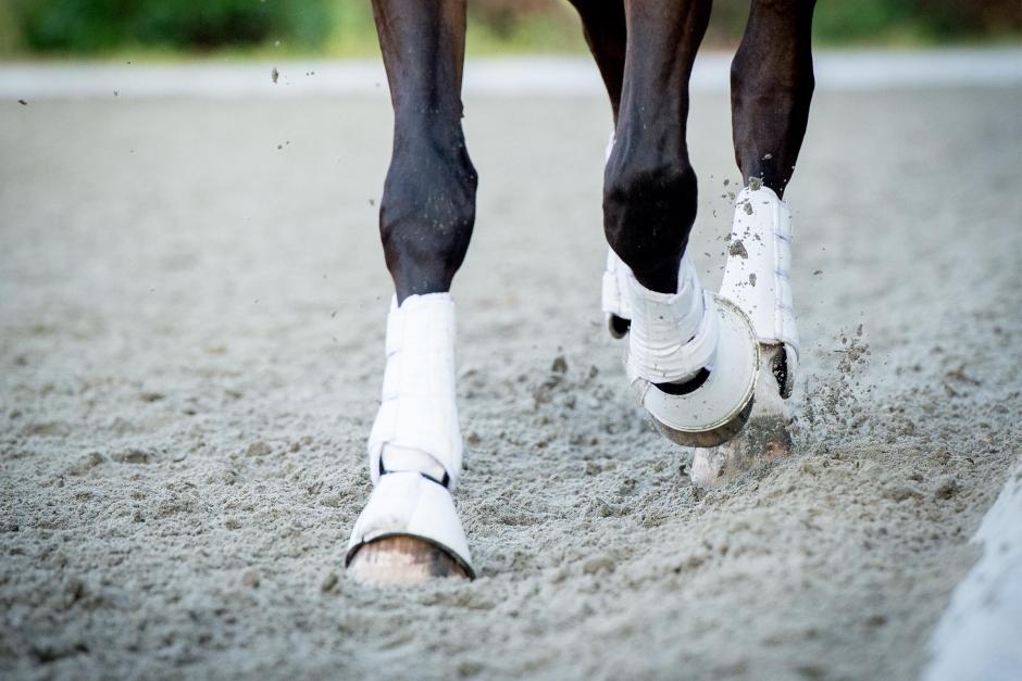 Efter lång rättsprocess – dressyrprofilen ersätter avlivade hästen